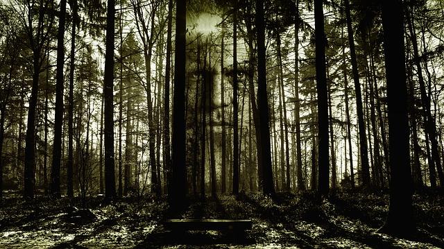 Les, stromy, hororová atmosféra.jpg