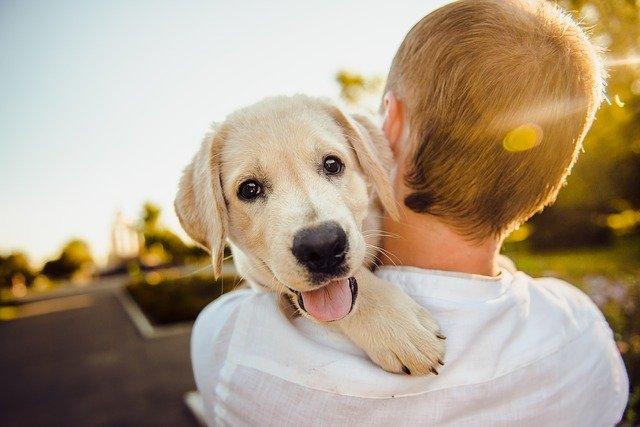 chlapec so psom na rukách.jpg