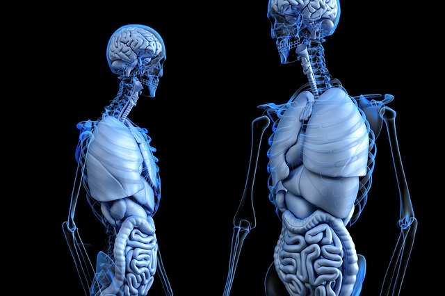 Konštrukcia kostry.jpg