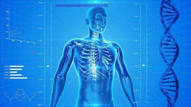Vývoj kostí.jpg